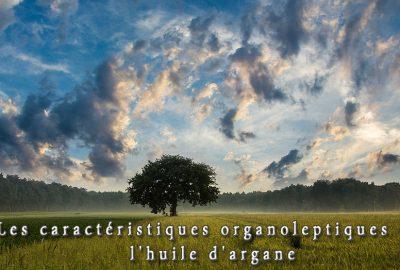 caracteristiques-organoleptiques-huile-argan